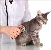 Ветеринарные клиники в Березовском